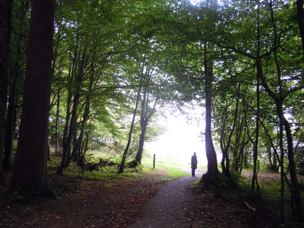 the woods, Kilronan